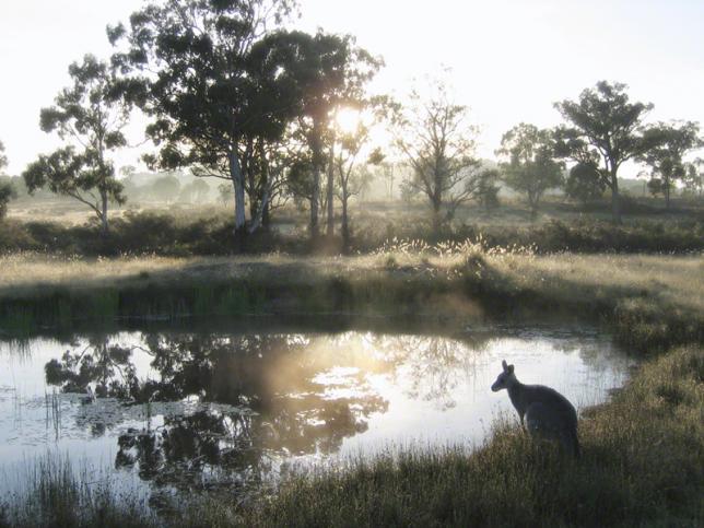 Pond Roo